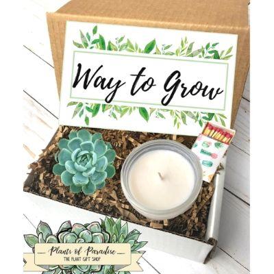 succulent promotion gift basket